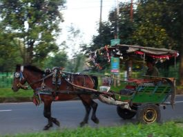 Delman - Indonesia traditional horse cart