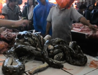Indonesia extreme food - Tomohon traditional market